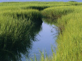 A Small Slough or Channel Running Through a Grassy Marsh