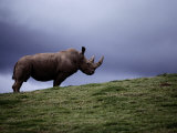 Northern White Rhinoceros Papier Photo par Michael Nichols