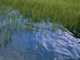 Rippling Water Among Aquatic Grasses in a Marsh