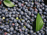 A Pile of Ripe Blueberries with a Few Scattered Leaves