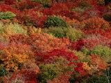 Autumn Colors Paint a Canadian Forest