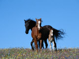 A View of Wild Horses in a Field of Wildflowers