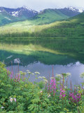 Summit Lake  Sunbeam on Forest  Firewee  Chugach National Forest  Alaska