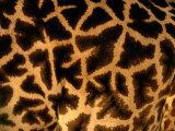A Close View of a Giraffes Irregular Spots