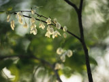 Delicate White Flowers Adorn a Tree Branch in the Spring