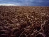Lightning Strike in a Wheatfield