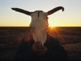 A Simpson Desert Local Hides His Face Behind a Cattle Skull