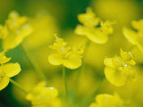 A Close View of Fresh Yellow Wildflowers