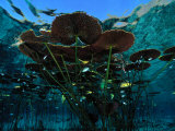 Long-Stemmed Water Lilies Reach for the Hot Mexican Sun