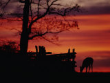 The Sunset Silhouettes a White-Tailed Deer Near a Fence
