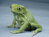 A Small Tree Frog