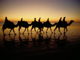Silhouettes of Tourists Riding Camels on a Beach