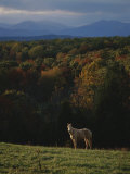 A Horse Stands on a Hill Overlooking Autumn Foliage and Mountains
