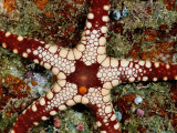 A Close-View of a Starfish