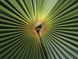 A Close View of a Palm Frond