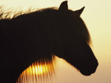 Wild Pony in Silhouette at Twilight