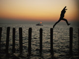 Bo Hoppin Leaps Between Pilings in the Chesapeake Bay off Great Fox Island  Virginia