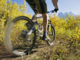 Cyclist Rides Mountain Bike Among Trees with Autumn Foliage