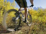 Cyclist Rides Mountain Bike Among Trees with Autumn Foliage