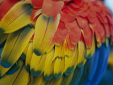 A Close-up View of a Parrots Rainbow Feathers