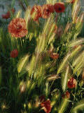 Wildflowers and Grass Tufts in Provence