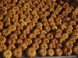 Rows of Little Squash Resembling Miniature Pumpkins Form a Pattern