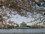 Cherry Blossoms in Full Bloom Frame the Jefferson Memorial Across the Tidal Basin
