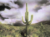 A Saguaro Cactus Points Towards a Stormy Summer Sky