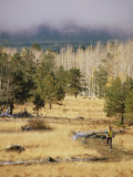 Trail-Running in the San Francisco Peaks