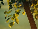 Close View of a Tree Branch and Leaves