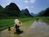 Farmers in Rice Fields of Farming Village  Yangdi Valley