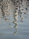 An Abstract Reflection of the Washington Monument on the Rippled Surface of the Tidal Basin