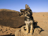Portrait of a Puppy Next to a Rock Carved with Anasazi Petroglyphs