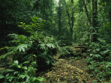 Lush Woodland View in Papua New Guinea