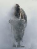 Bison fantômatique dans un nuage de vapeur, en hiver, Parc National de Yellowstone Papier Photo par Norbert Rosing