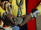 Close View of Peyote Cacti (Lophophorus Williamsii) Being Held by a Native American Medicine Man