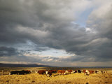 A Cloud-Filled Sky over a Yakima Valley Cattle Ranch
