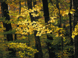 A Woodland View into an Autumn-Colored Forest