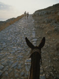 A Couple and a Donkey Walk up the Cobblestone Road to the Acropolis