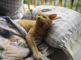 A Yawning Cat Wakes from a Nap in a Humans Bed
