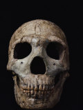 This Neandertal Skull from Wadi Amud is About 60 000 Years Old