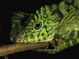A Close View of the Head of a Lizard Lying Along a Branch