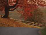 A Country Road Turns Downhill  Passing a Wooden Fence and a Tree