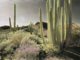 Wildflowers Bloom Among Cactus in a Desert Landscape