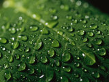 Water Drops and Droplets on a Leaf