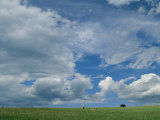 Cloud-Filled Sky over Pronghorns and an American Bison on a Prairie
