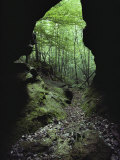 A View into a Forest from a Woodland Cave