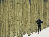 Man on Skis Touring an Aspen Glade in the Snow