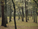 A Woodland View with New Spring Foliage and Blooming Trees