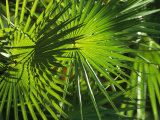 Close View of a Palm Frond